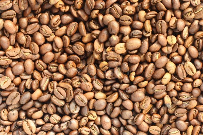 Download Feijão de café foto de stock. Imagem de clear, fundo - 29839006