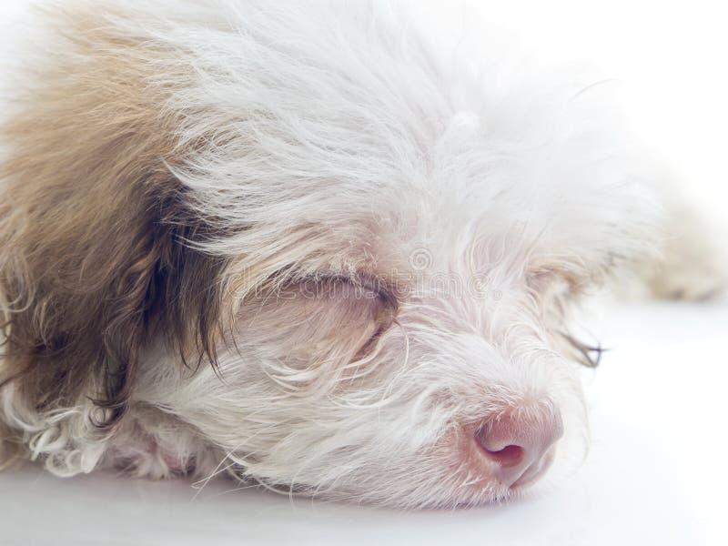Esta foto muestra un perro cansado o soñoliento fotos de archivo libres de regalías