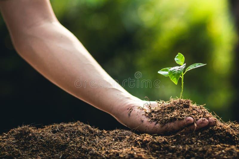 Establecimiento de la fruta de la pasión y de la mano del crecimiento de los árboles que riegan en luz y fondo de la naturaleza imagenes de archivo