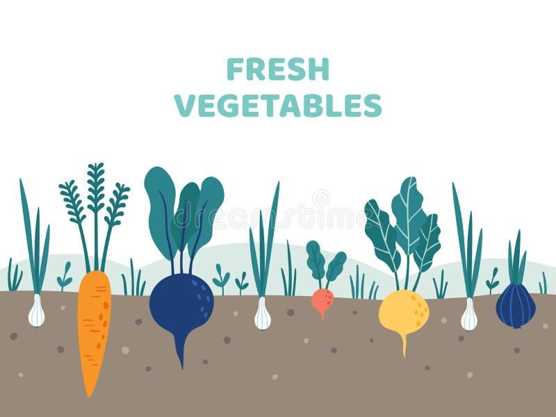 Establecimiento de los tomates Verduras que cultivan un huerto comida, jardines de las patatas y ejemplo del vector de los jardin ilustración del vector