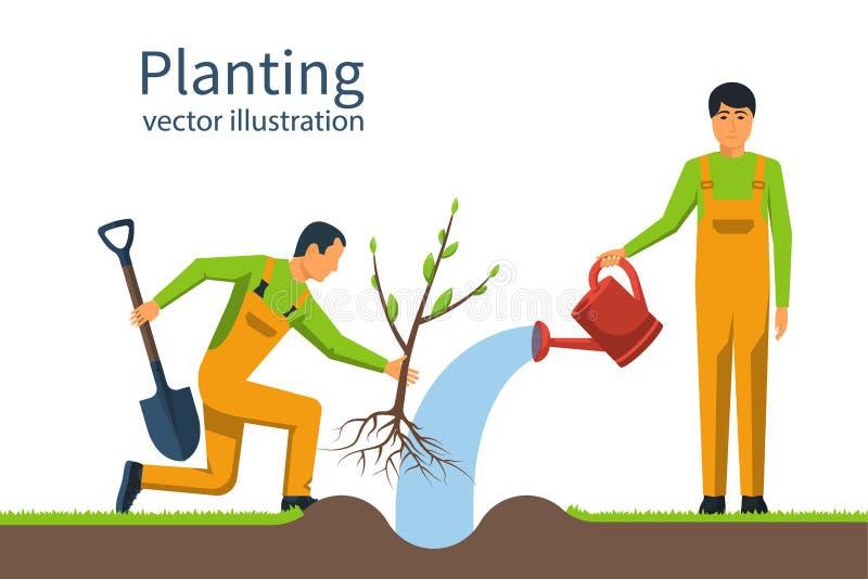 Establecimiento del árbol El jardinero con la pala y la regadera se sostienen en Han ilustración del vector