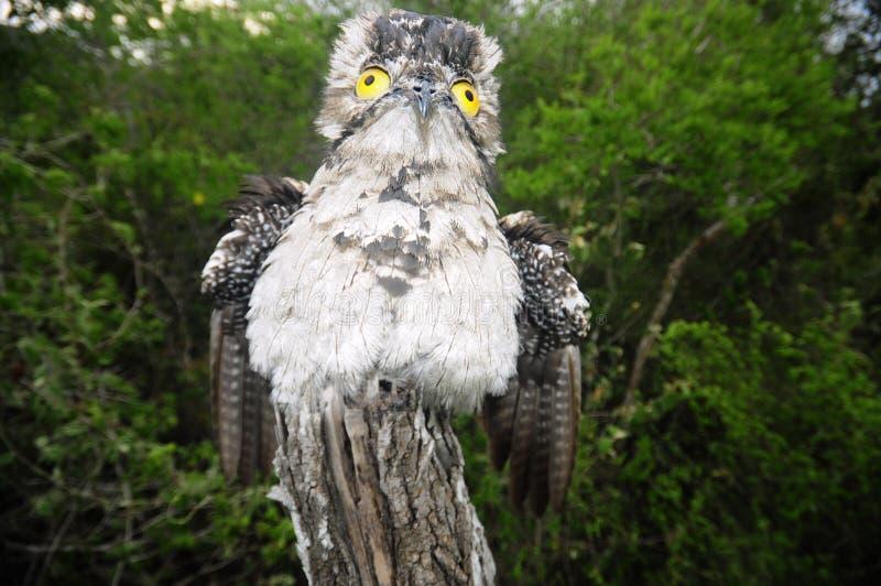 Estaca do pássaro foto de stock royalty free