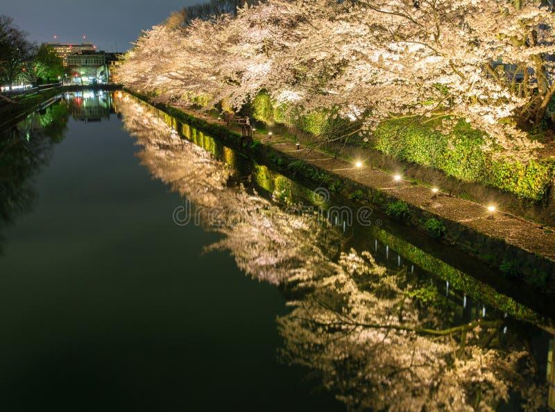 Estación de la flor de cerezo del ` s de Japón imagenes de archivo