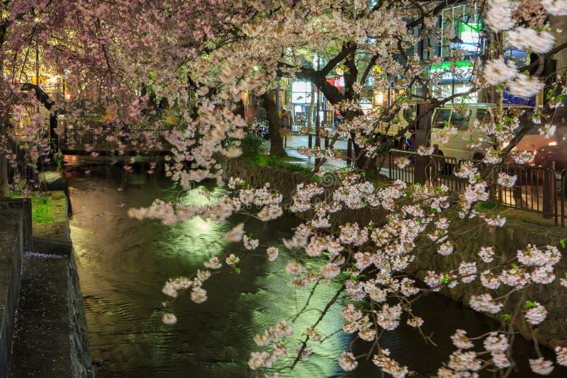 Estación de la flor de cerezo del ` s de Japón imagen de archivo