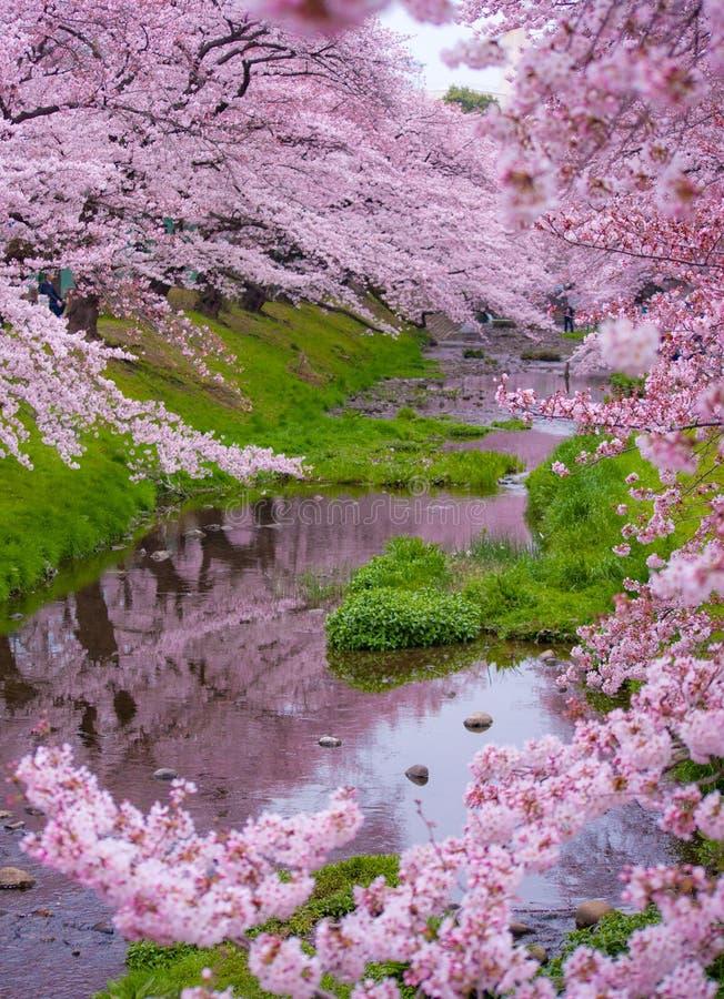 Estación de Sakura fotografía de archivo libre de regalías