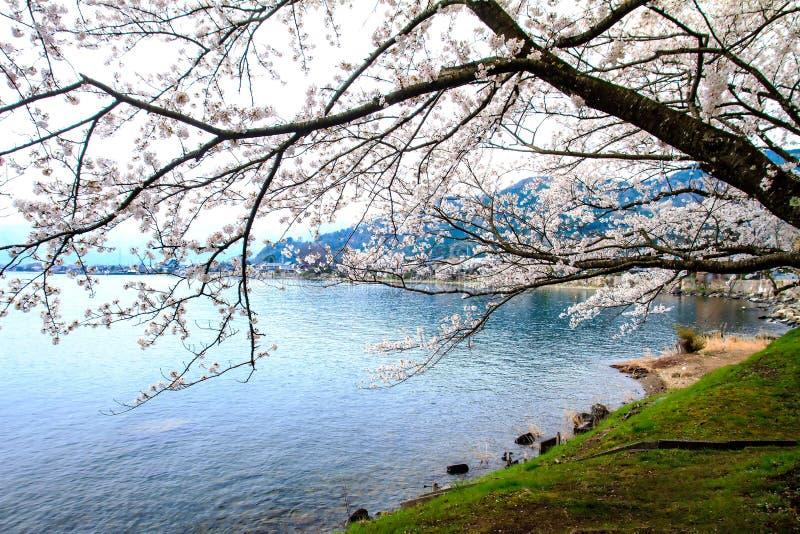 Estación de Sakura en Japón foto de archivo libre de regalías