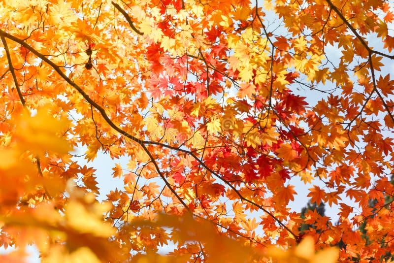 Estación del otoño del árbol y de hojas fotografía de archivo