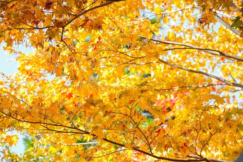 Estación del otoño del árbol y de hojas fotos de archivo libres de regalías