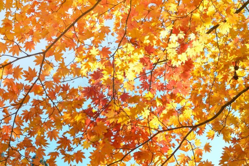 Estación del otoño del árbol y de hojas fotografía de archivo libre de regalías