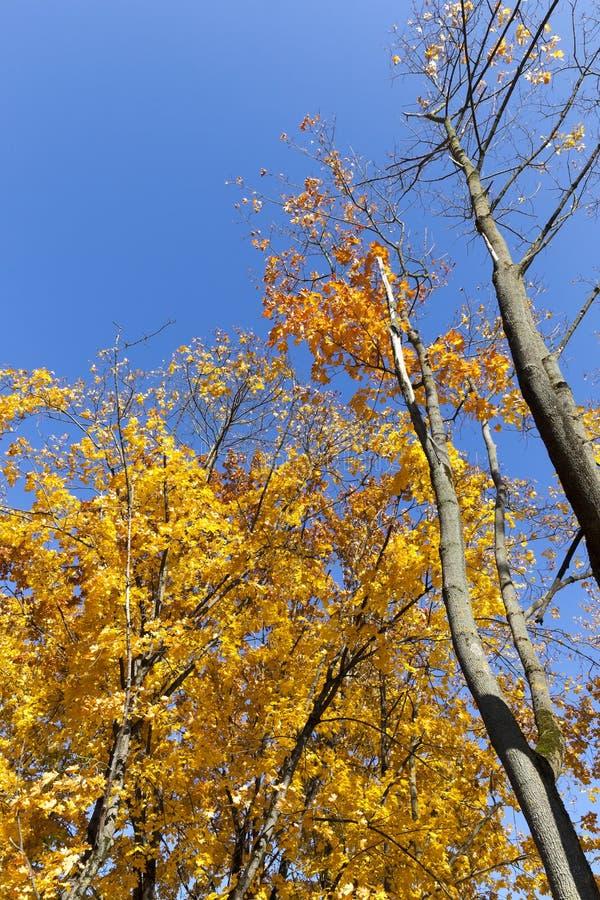 Estación del otoño fotografía de archivo