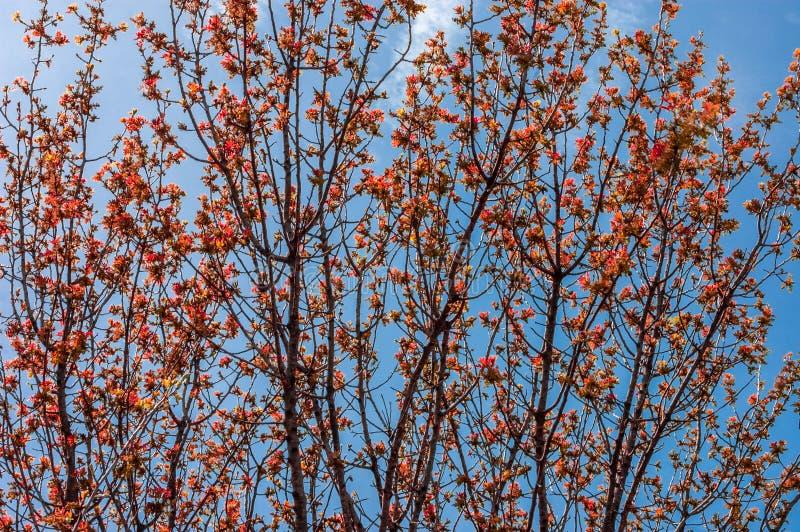 Estación del otoño, bosque del cuento de hadas con el árbol grande imagen de archivo libre de regalías