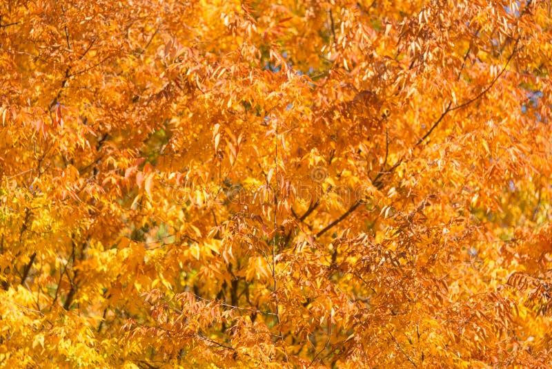 Estación del otoño de la caída imagenes de archivo