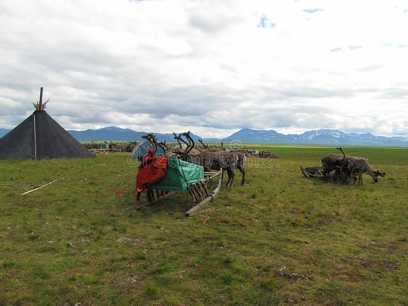 Estación del pastor del reno en la tundra imágenes de archivo libres de regalías