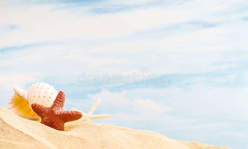 Estación del verano, concha marina natural colorida y estrellas de mar en la playa arenosa con el fondo del cielo azul y el espac foto de archivo