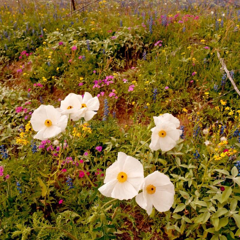 Estación del Wildflower fotografía de archivo libre de regalías