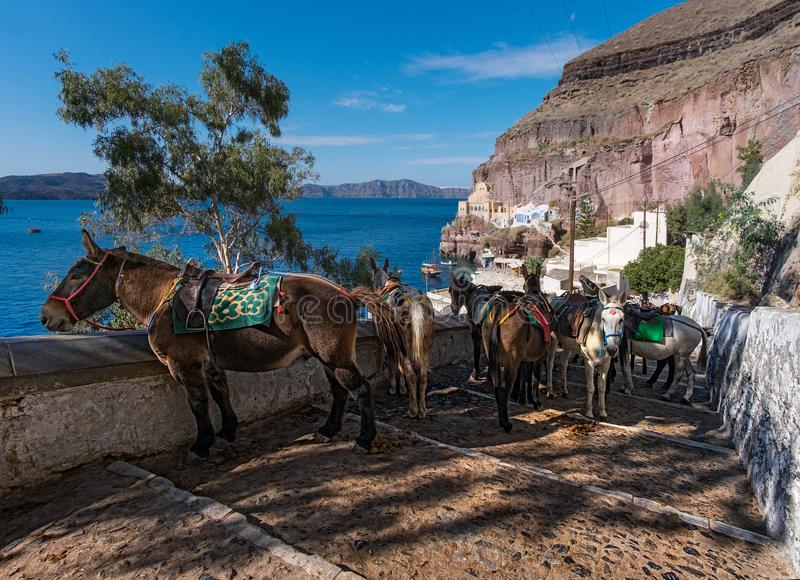 Estacionamiento de burros La ciudad de Thira La isla de Santorini Grecia foto de archivo libre de regalías