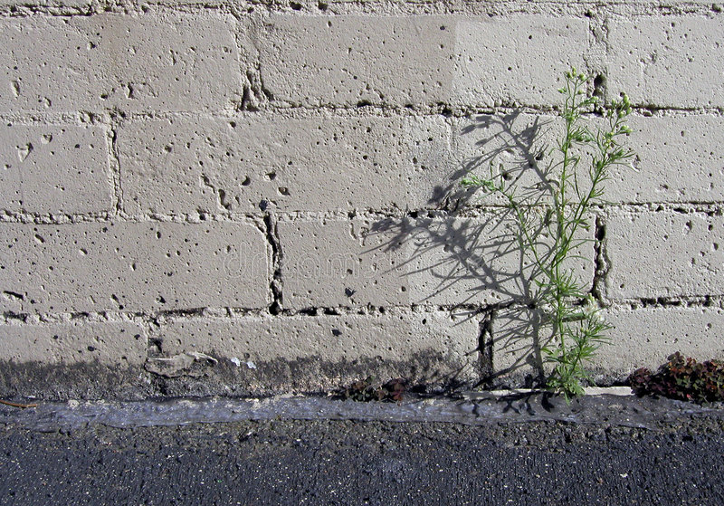 Estacionamiento Weed fotos de archivo