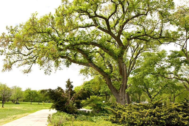 Estacione com a árvore verde velha grande durante a estação de mola imagens de stock