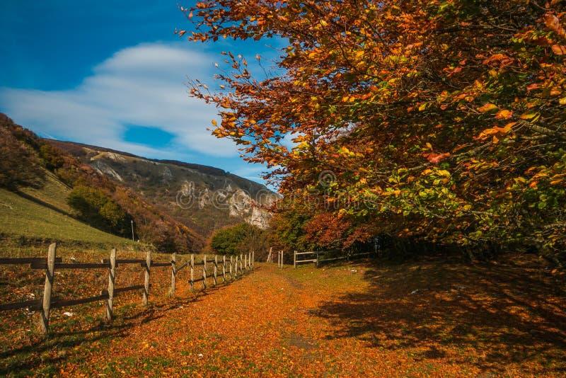 Estacione com árvores de faia e cerque para animais na estação do outono foto de stock royalty free