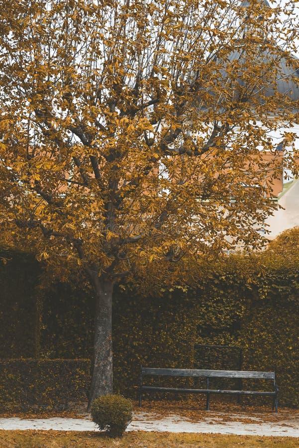 Estacione com árvores, os arbustos cortados e um banco Paisagem amarela do outono fotografia de stock