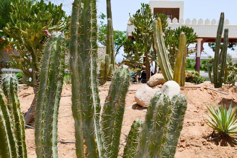Estacione com o deserto tropical exótico do cacto contra as construções de pedra brancas no estilo latino-americano mexicano cont fotografia de stock royalty free
