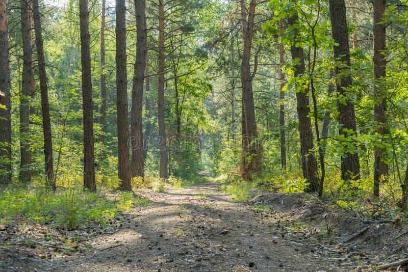 Estacione a estrada do cascalho com as árvores e as plantas verdes coloridas outono nos lados Estrada de floresta no valor máximo fotografia de stock royalty free