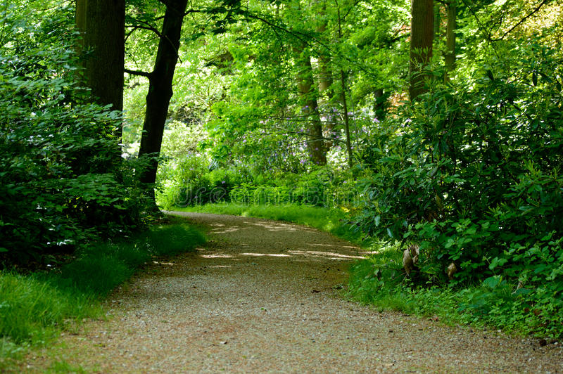 Estacione a estrada ou o trajeto do cascalho que correm com as árvores de floresta verdes e o p fotos de stock royalty free
