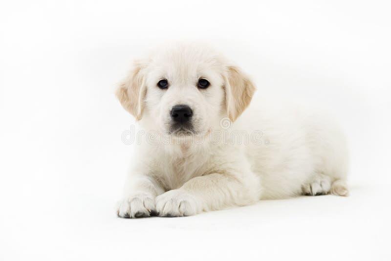 Estada do filhote de cachorro imagem de stock royalty free