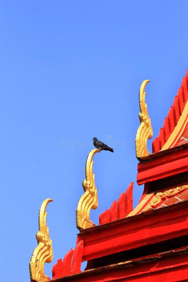Estada do pombo na estrutura do naga no frontão fotos de stock