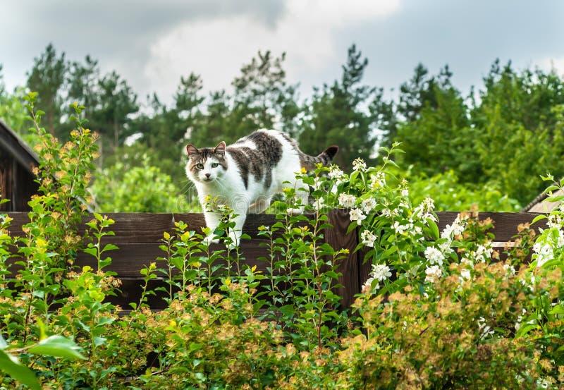 Estadas bonitos e cinzentas do gato na cerca marrom, cercada com plantas e flores sob o céu nebuloso cinzento e olhares à câmera foto de stock