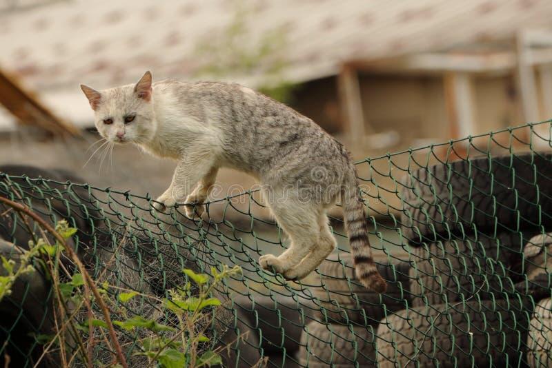 Estadas da aleia da estática de um gato cinzento grande ou do gato em uma cerca verde na sucata do local de eliminação, desperdíc foto de stock