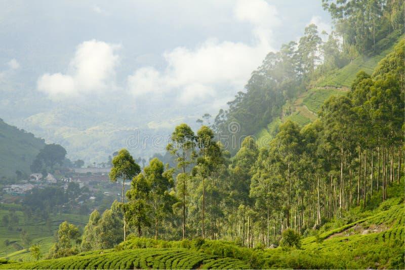 Estado del té en Sri Lanka foto de archivo