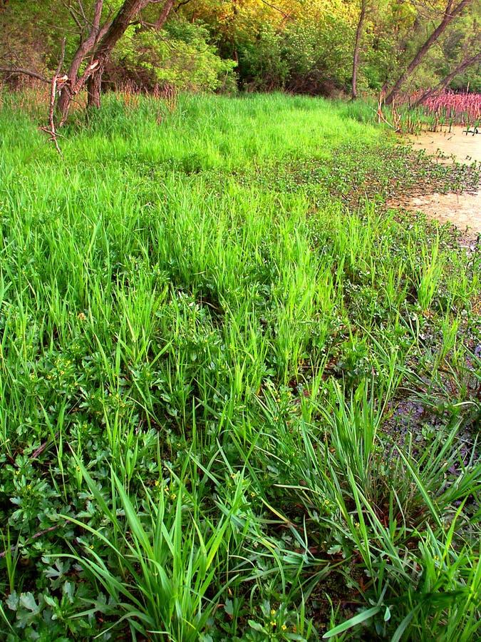 Estado Forest Wetland de la moraine de la caldera fotografía de archivo