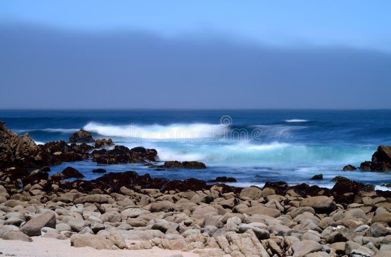 Estado Marine Reserve de Asilomar da baía de Monterey fotos de stock royalty free