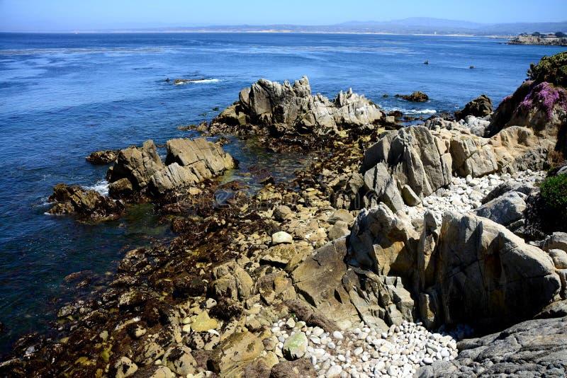Estado Marine Reserve de Asilomar da baía de Monterey foto de stock royalty free
