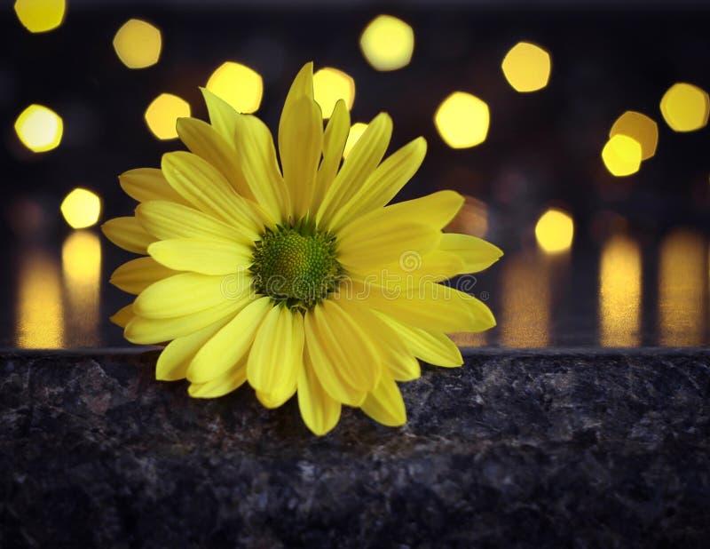 Estallido del amarillo con el bokeh foto de archivo libre de regalías