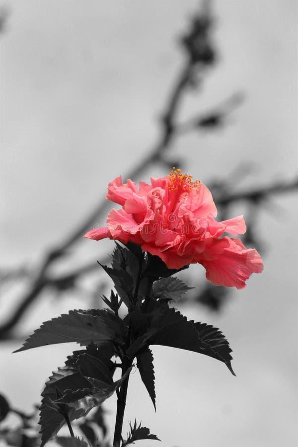 Estallido del color foto de archivo