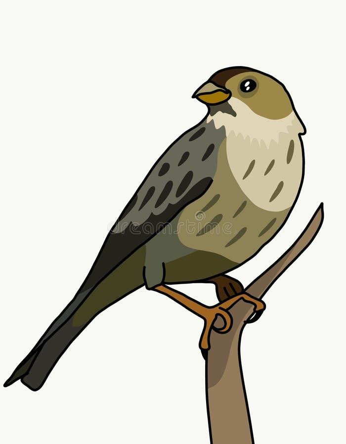 Estamenha de milho do pássaro ilustração royalty free