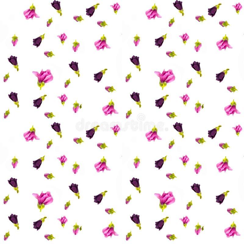Estampado de flores con los wildflowers rosados y beige, hojas verdes, ramas en el fondo blanco Endecha plana, visión superior stock de ilustración