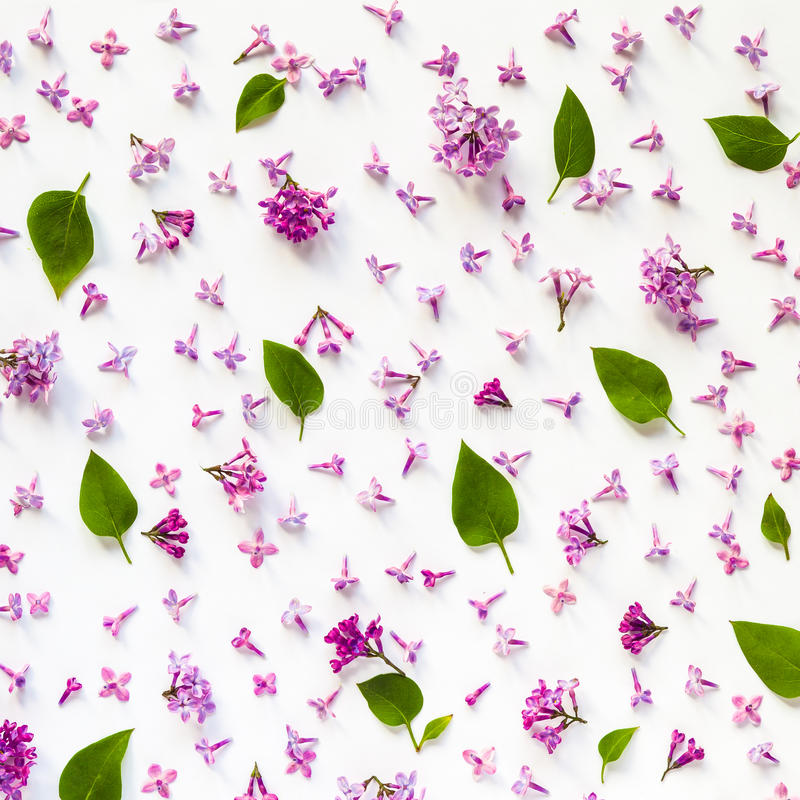Estampado de flores de las flores y de las hojas frescas de la lila en blanco foto de archivo libre de regalías