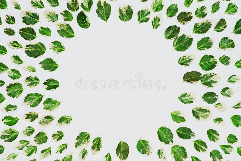 Estampado de flores hecho de las hojas verdes, ramas en el fondo blanco Endecha plana, visión superior Textura del modelo de la h fotografía de archivo libre de regalías