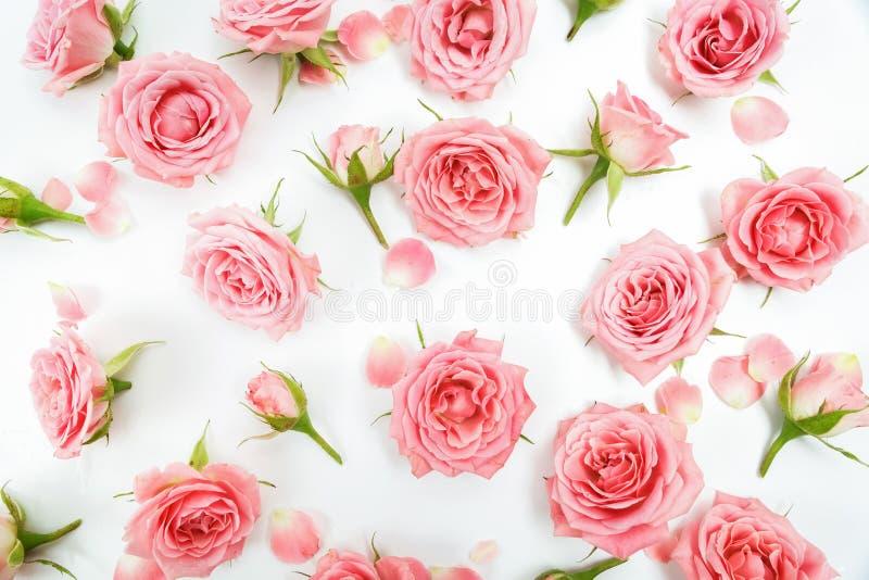 Estampado de flores hecho de las rosas rosadas, hojas verdes, ramas en el fondo blanco Endecha plana, visión superior Modelo flor imagenes de archivo