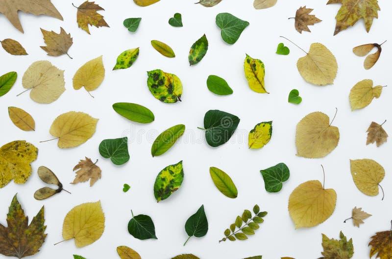 Estampado de flores hecho de hojas coloridas secas en el fondo blanco Endecha plana, visión superior omposition de la endecha del fotos de archivo libres de regalías