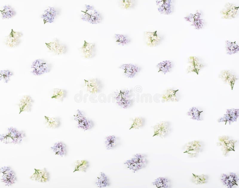 Estampado de flores hecho de la primavera blanca y de las flores violetas de la lila aisladas en el fondo blanco Endecha plana foto de archivo libre de regalías