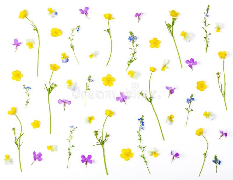 Estampado de flores hecho de las flores del prado aisladas en el fondo blanco Endecha plana foto de archivo