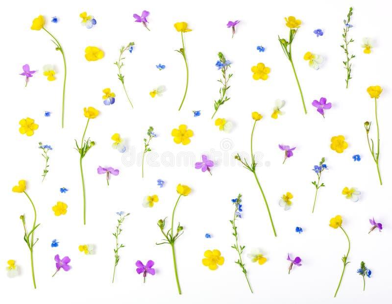 Estampado de flores hecho de las flores del prado aisladas en el fondo blanco Endecha plana imágenes de archivo libres de regalías