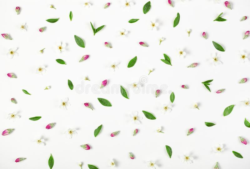 Estampado de flores hecho de las flores de la primavera, de los brotes rosados y de las hojas aislados en el fondo blanco Endecha fotografía de archivo libre de regalías