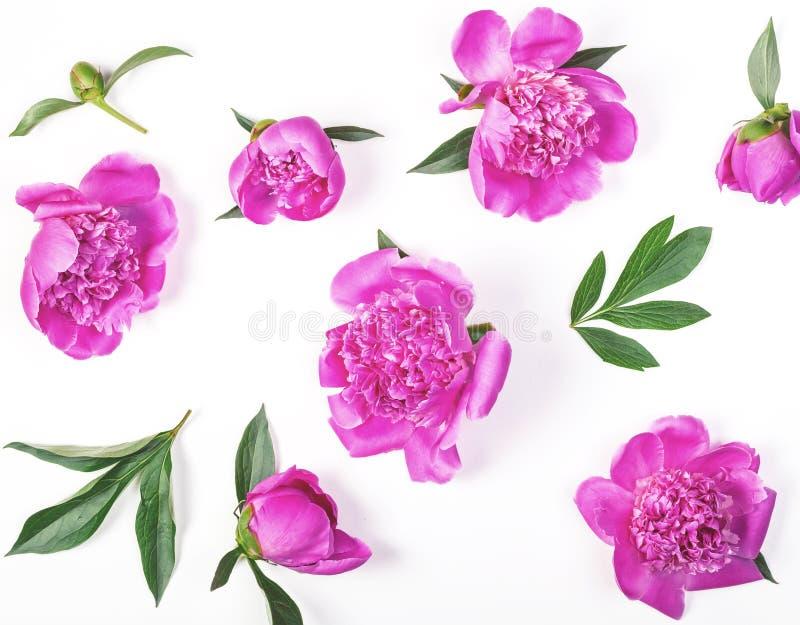 Estampado de flores hecho de las flores rosadas y de las hojas de la peonía aisladas en el fondo blanco Endecha plana imágenes de archivo libres de regalías