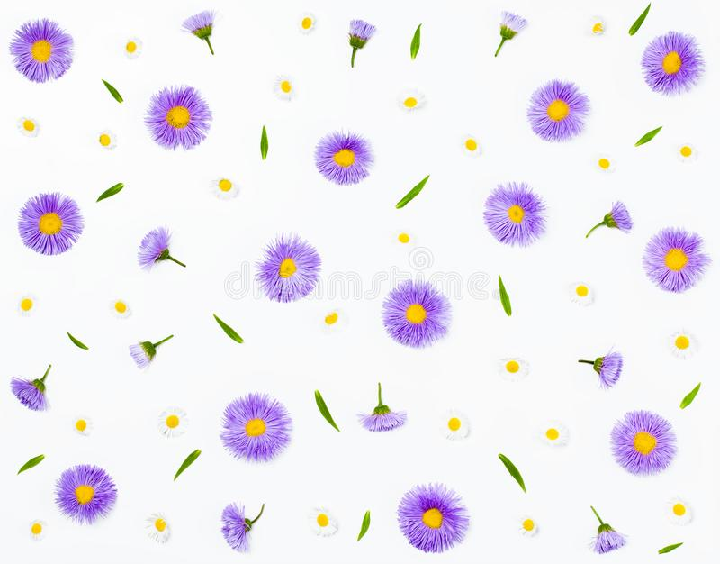 Estampado de flores hecho de los asteres y de la manzanilla violetas en el fondo blanco Endecha plana fotos de archivo