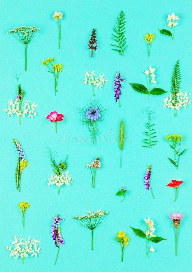 Estampado de flores hecho de flores y de hierbas curativas salvajes fotografía de archivo